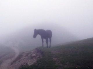 Horn and Haze